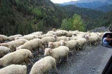 traffic jam Tusheti style.